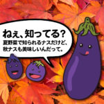 夏が終わり旨味が更に詰まった秋の幸、意外と知らない秋茄子の話